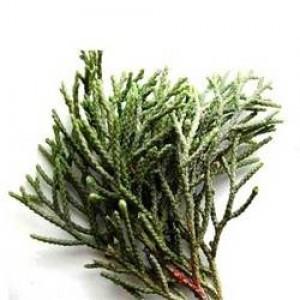 cypress-essential-oil-aos21-250x250-300x300